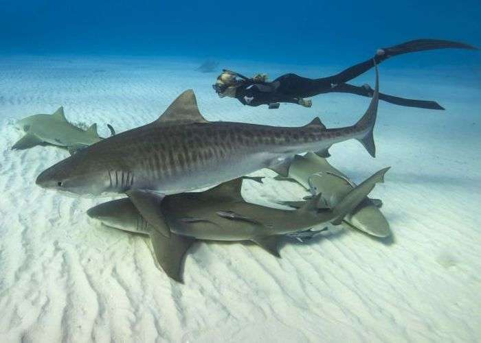 Тендітна блондинка і хижа біла акула (14 фото)
