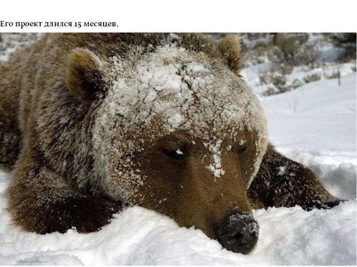 Дивовижні і небезпечні фотографії тварин (15 фото)