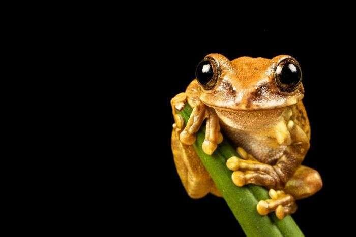 Дивовижні знімки тварин (90 фото)