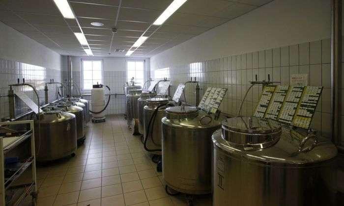 Фотозвіт з центру штучного запліднення великої рогатої худоби (18 фото)