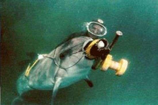 Збройні дельфіни втекли з військового океанаріуму (3 фото)