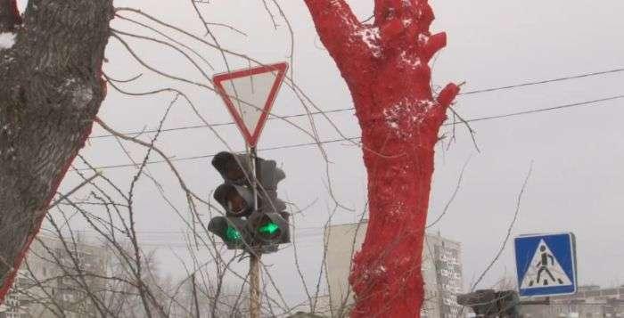 Пофарбувати дерева в червоний колір до приїзду Суркова (4 фото + відео)
