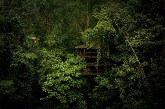 Вражаючий житловий комплекс на дереві (21 фото)