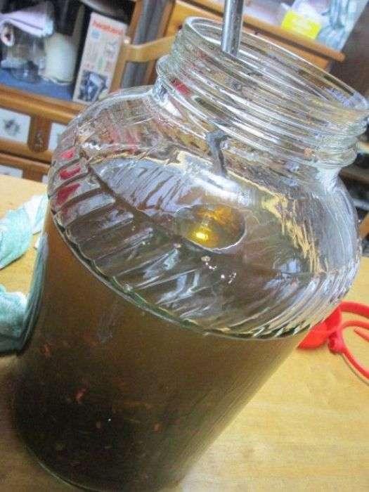 Японська настоянка з отрутою гігантського шершня (4 фото)