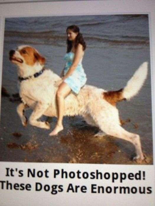 Майстри фотошопу з соціальних мереж (52 фото)
