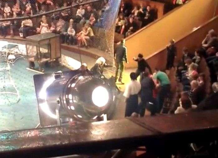 Дика пантера накинувся на жінку з дитиною в цирку Новосибірська (2 фото + відео)