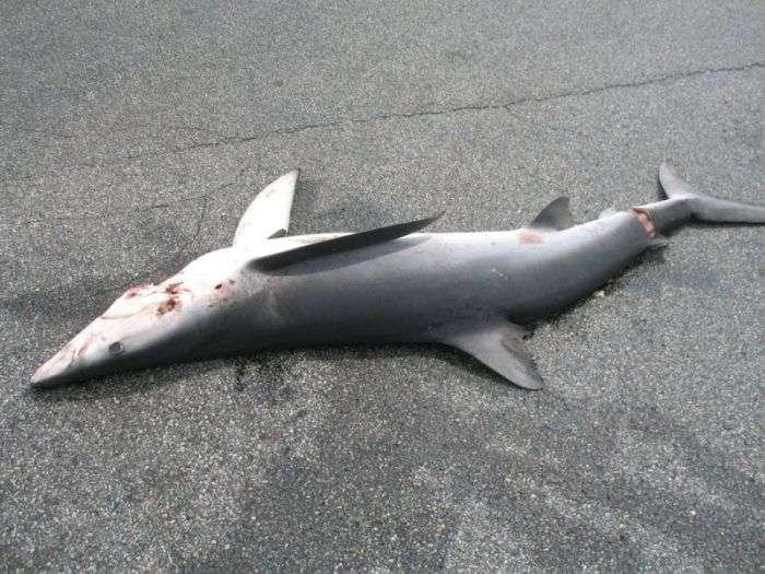 Велика риба на автомобільній парковці (6 фото)