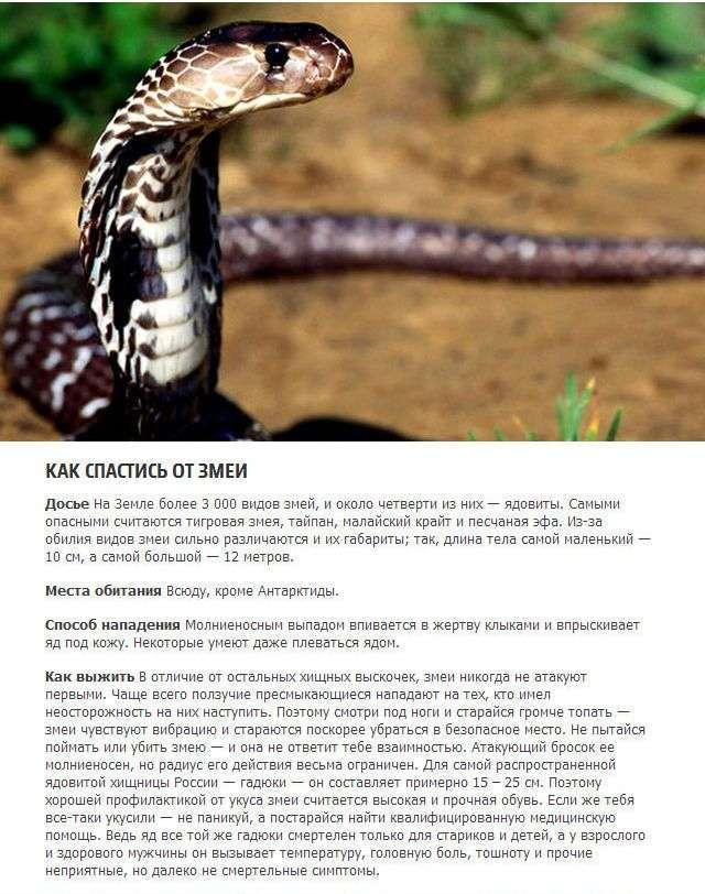 Як вижити в сутичці з диким тваринам (5 фото)